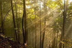 forest-3412221_1920.jpg