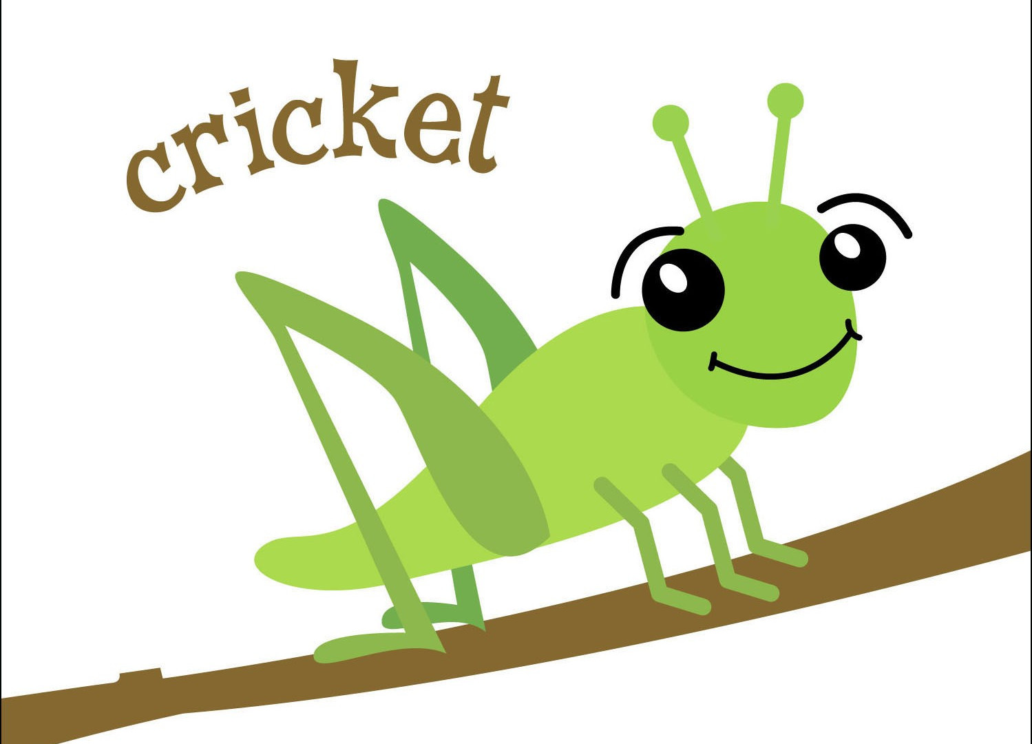 noisy cricket graphic.jpg