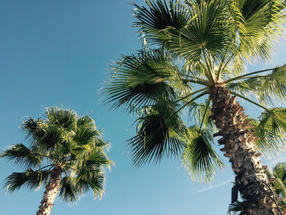 Sunshine and palm trees in San Diego