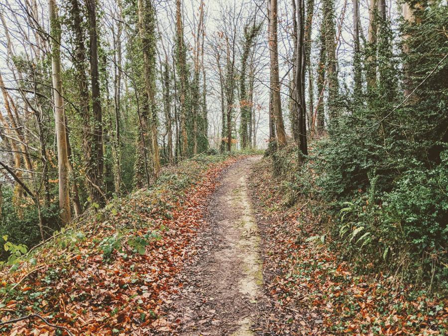 The path to creative bliss, Hawkwood