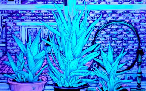 Aloe Aloe UV