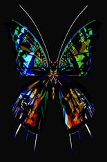 Swallowtail Halfsider