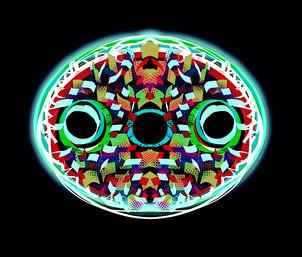 Diatom Oval Multi