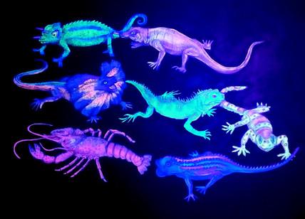 Iguanas UV