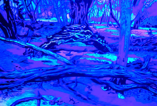 Epping Forest1 UV