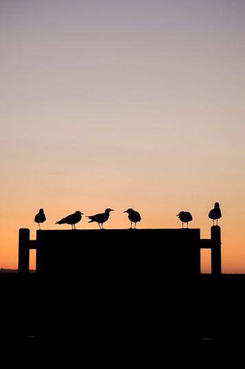 Te Puru, Sunset