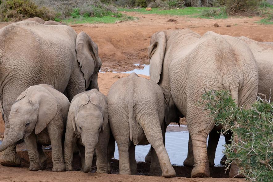 Addo Elephant Park