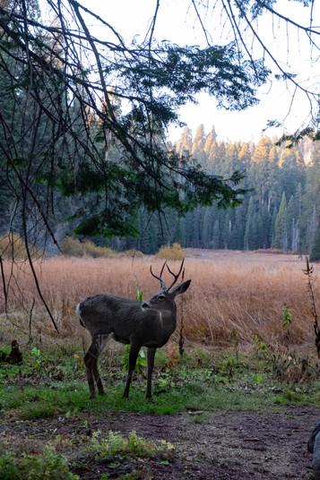 Crescent Meadow, Sequoia