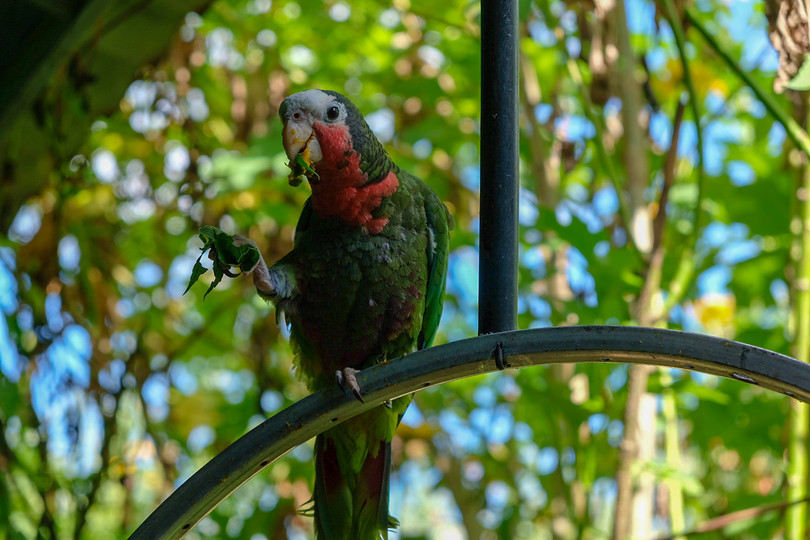 Local resident of Trinidad