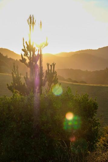 Whananaki Sunset