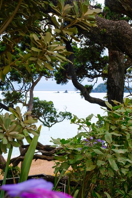 Whananaki hidden beach