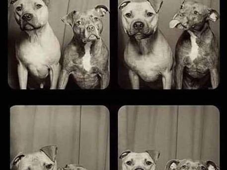 Dog Eat Dog World!
