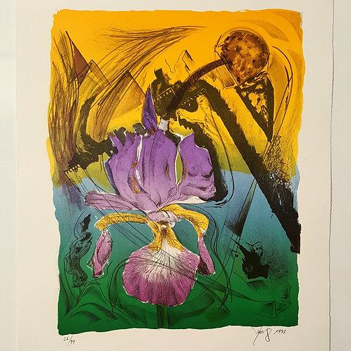 Wiesen Iris