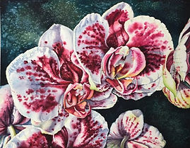 Pink-and-White-Orchids-WC-PTG_MEAST2.jpg