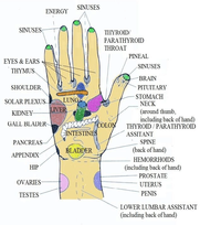 Acupressure-points-present-on-the-palm-5