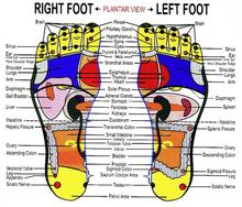 reflexology-foot-chart-lifeologia-very-c
