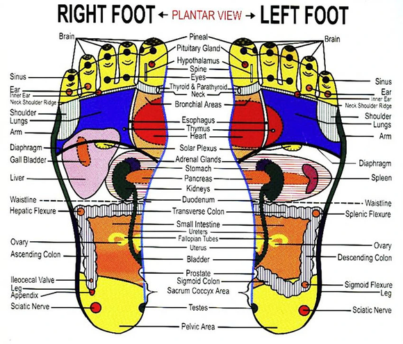 reflexology-foot-chart-lifeologia-very-c