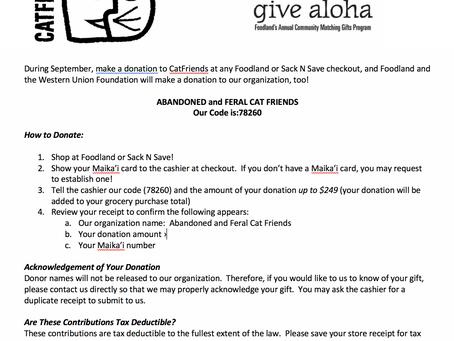 CatFriends | Give Aloha Fundraiser | O'ahu, Hawai'i