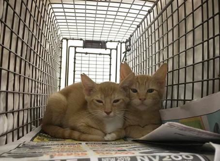 CatFriends | TNRM Clinic Success! | O'ahu, Hawai'i