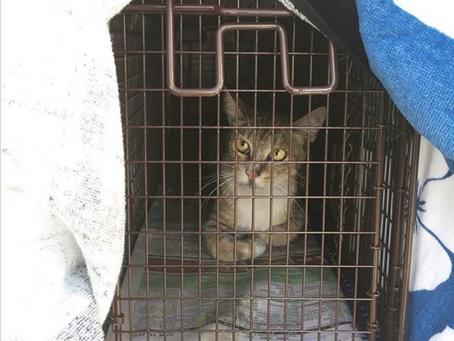 CatFriends | A 215-Cat Spay+Neuter Weekend! | O'ahu, Hawai'i