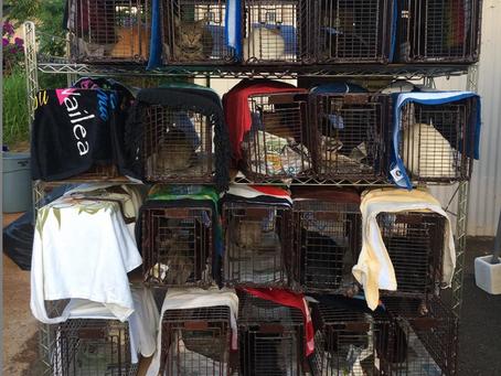 CatFriends | Spay+Neuter Clinic Sterilizes 305 Felines! | O'ahu, Hawai'i