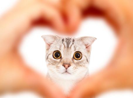 CatFriends | $50K Fundraising Challenge | O'ahu, Hawai'i