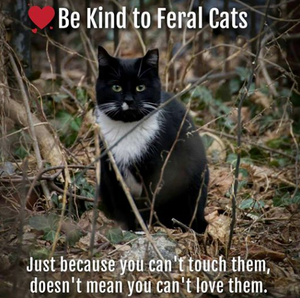 """Be kind to feral cats.  Just because you can't touch them doesn't mean you can't love them"" is the picture text.  The post concerns a free TNR clinic for Waianae, Hawai'i community cats from 24-26 Aug 19."