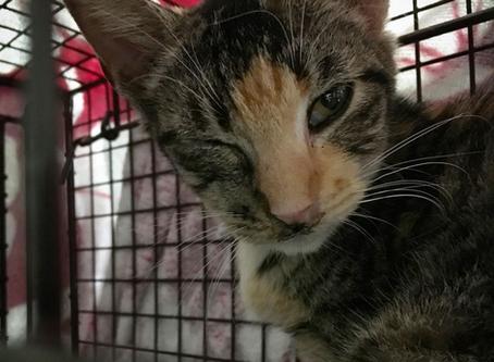 CatFriends | 234 Free-Roaming Cats Spayed/Neutered! | O'ahu, Hawai,i