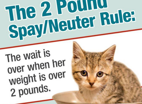 CatFriends | Spay/Neuter Rule | O'ahu, Hawai'i