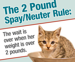 A little brown kitten looking at you.  The caption reads:  The 2-pound spay/neuter rule:  The wait is over when her weight is over 2 pounds.""