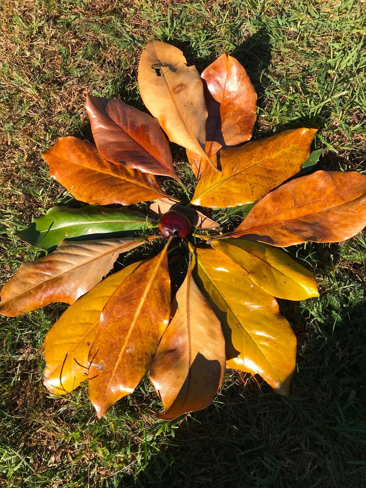 Composizione di foglie multicolore