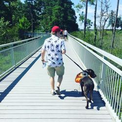 Lolli Walk