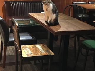 瑪多廳桌椅與店貓之一小花