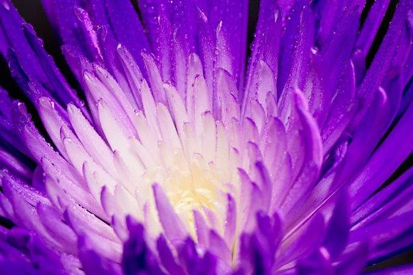 Purple Awakening (12x18)