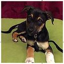 Lily Puppy_edited.jpg