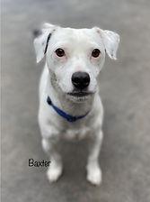 Baxter%20Headshot_edited.jpg