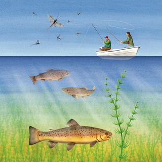 LOUGH ARROW  Illustration showing biodiversity and angling for interpretation signs at Lough Arrow in the Republic of Ireland.