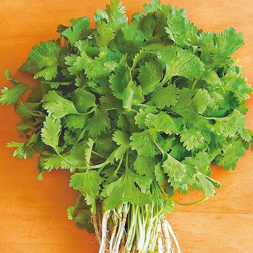 Кориандр салатный Слоуболт  /10 г/ Професійне насіння