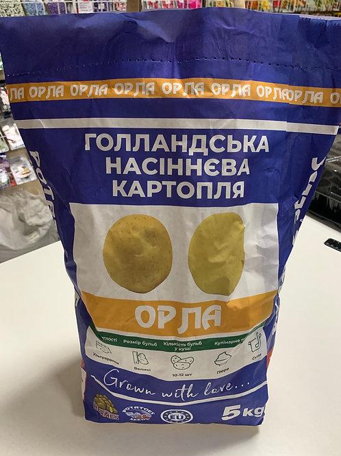Картофель Орла /5кг/ Бумажный пакет