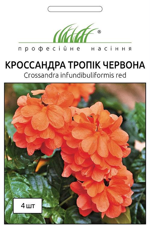 Кроссандра тропик красная /4шт/  Професійне Насіння..