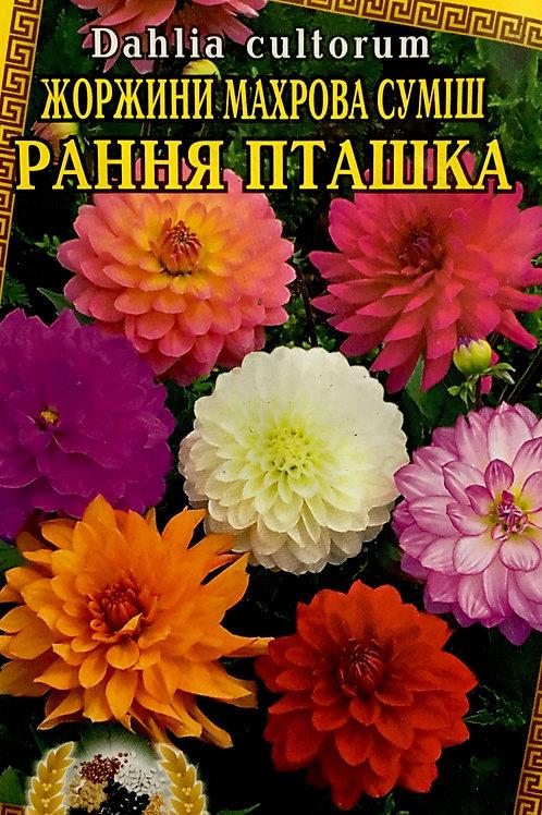 Георгина Ранняя пташка махровая смесь /0,2г/ НК Элит.