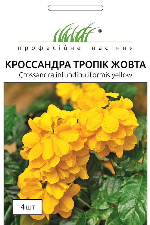 Кроссандра тропик желтая /4шт/ Професійне Насіння.  .