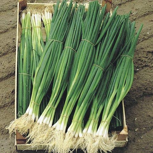 Лук на зелень Параде /200шт/ Професійне насіння.