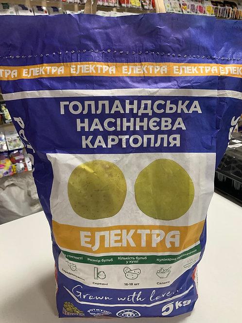 Картофель Электра /5кг/ Бумажный пакет.
