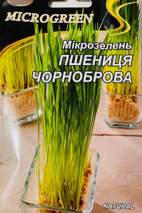 Микрозелень Пшеница Чернобровая органическая /50г/ НК Элит.