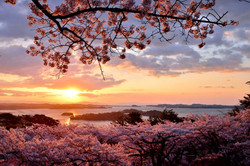 matsushima 8.jpg