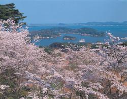 matsushima 7.jpg