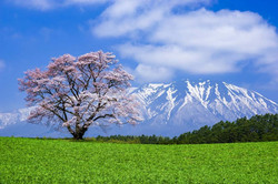 小岩井3.jpg