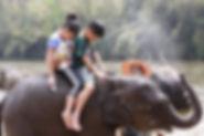 地表最強保育大象北碧遊