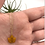Thumbnail: Orange Leaf Peeper Necklace